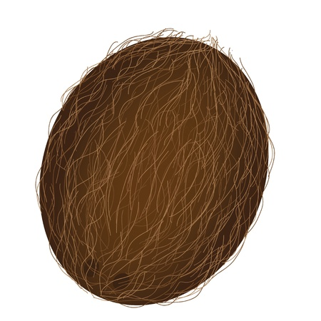 coconut isolated on white Vector