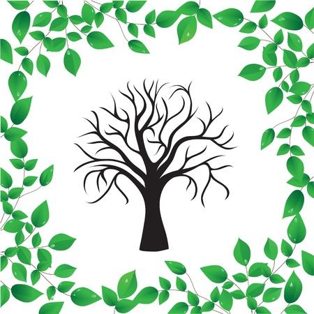 arbre     ? � feuillage persistant: Arbre isol� sur un fond blanc Illustration