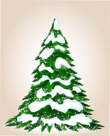 arbre     ? � feuillage persistant: Arbre de No�l en hiver, image pour la conception