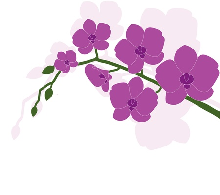 twig blossoming orchids on a white background Stock Vector - 14980022