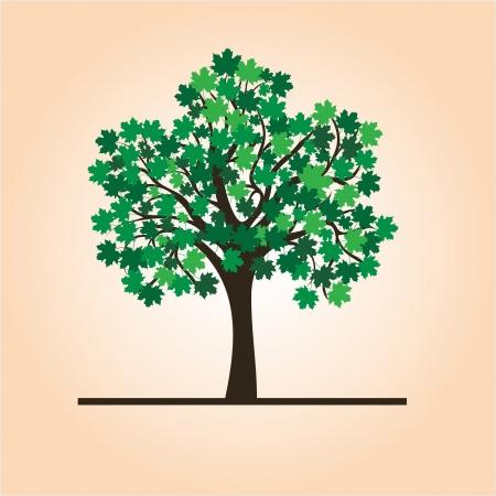 arboles frondosos: Verano árbol de arce, fondo del vector para el diseño