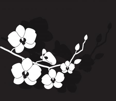 orchidee: stilizzato orchidea bianca su sfondo nero