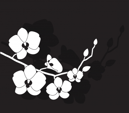 stylized white orchid on a black background Vector