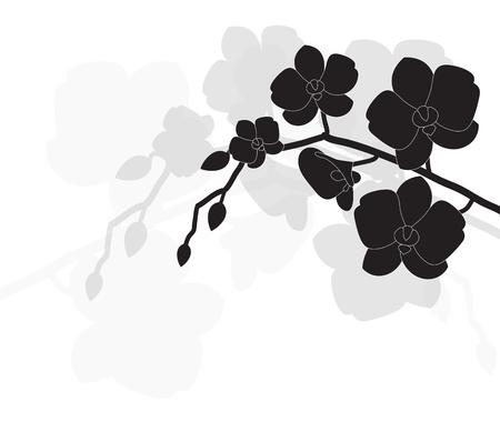 orchidee: stilizzato orchidea nera su uno sfondo bianco Vettoriali