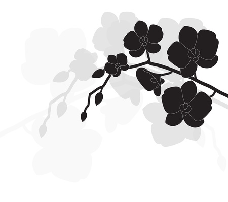 stylized black orchid on a white background Illustration