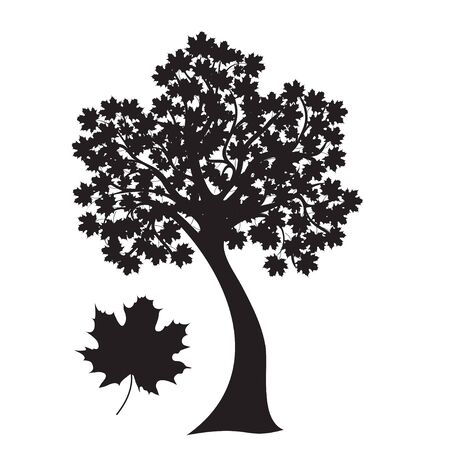 silueta: maple tree in black  Leaf close up Stock Photo