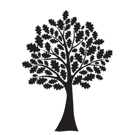 genealogical tree: black oak tree Illustration