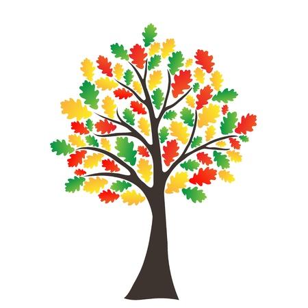 oak tree: Autumn tree