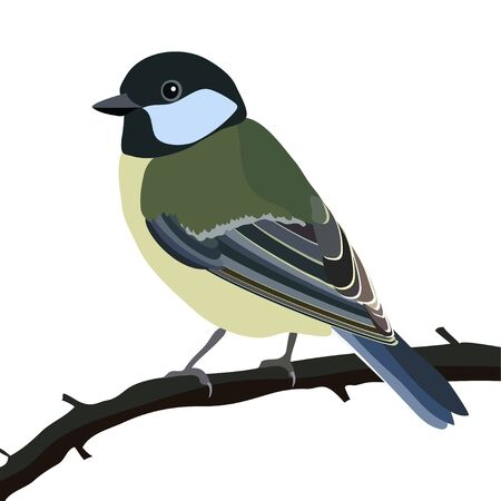 perching: Tit bird Illustration