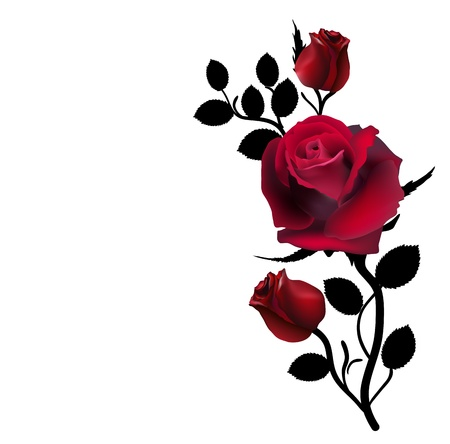flowers close up: three dark red roses isolated on white Illustration