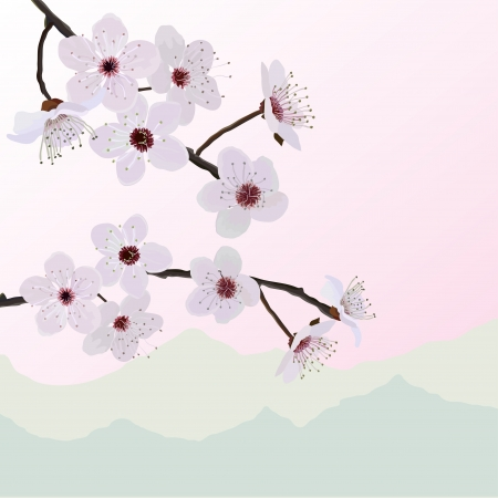 Almonds flowers Vector