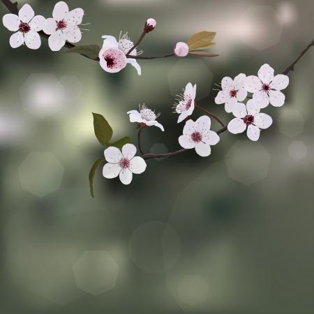 flor de sakura: Fondo de ?rboles de flor