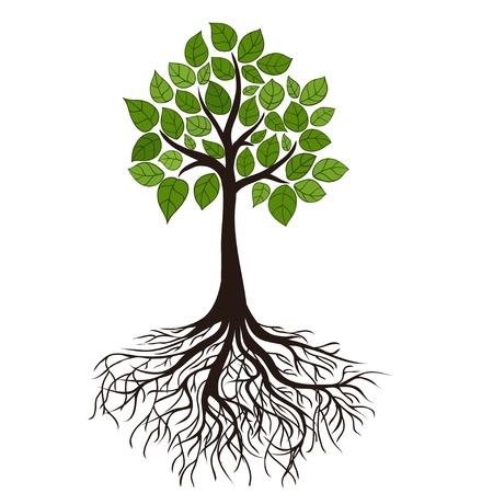 feuille arbre: Arbre avec des racines Illustration