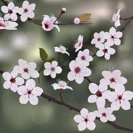Branch almond with flower Vector