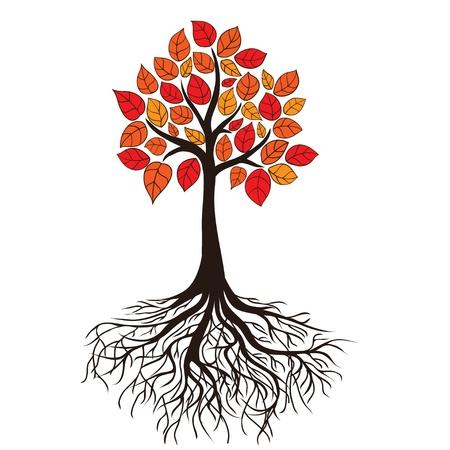 arbol raices: Árbol de otoño con las raíces. Vector