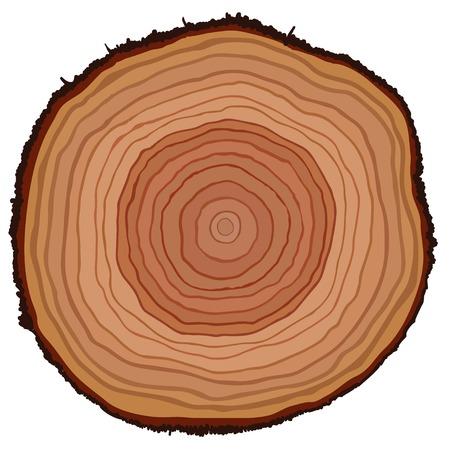 annual: Cross section of tree stump, vector illustration
