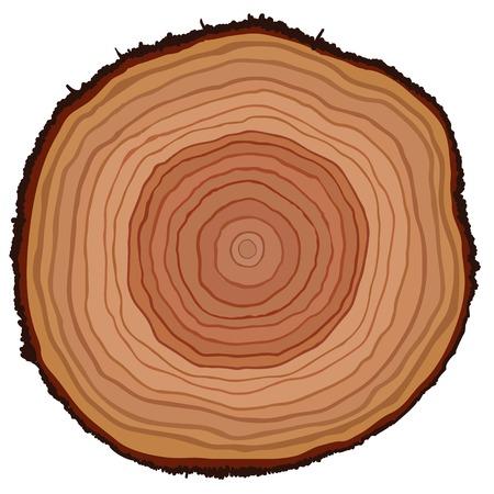 cut logs: Secci�n transversal del tronco de un �rbol, ilustraci�n vectorial