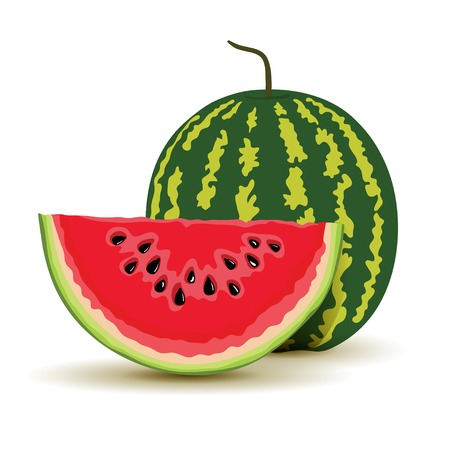 wholesome: Slice and watermelon in vector