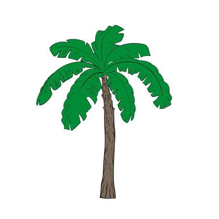 jednolitego: Banana drzewa ilustracji