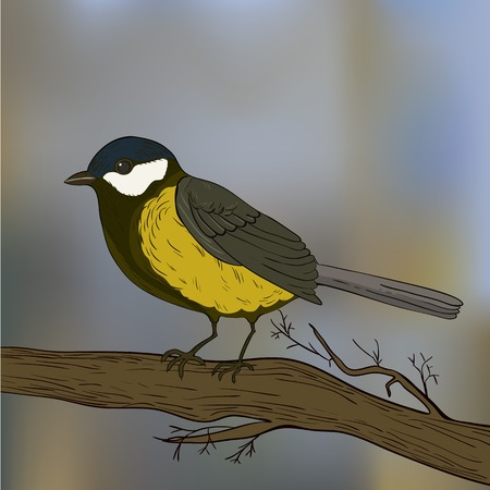 parus: Bird tit on branch in vector