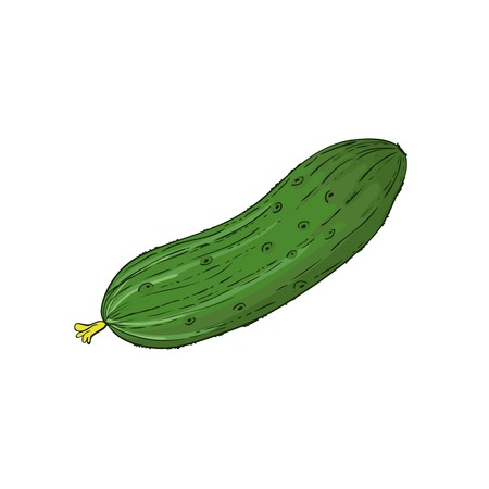 Cucumber isolated on white, vector image Vettoriali