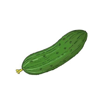 cucumber salad: Pepino aislado blanco imagen, vector de