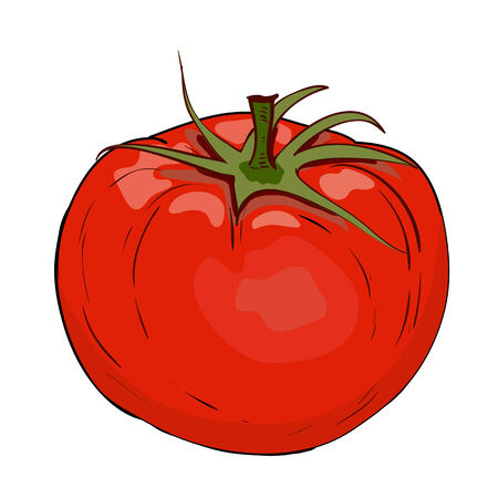 vegetarianism: Red tomato in vector