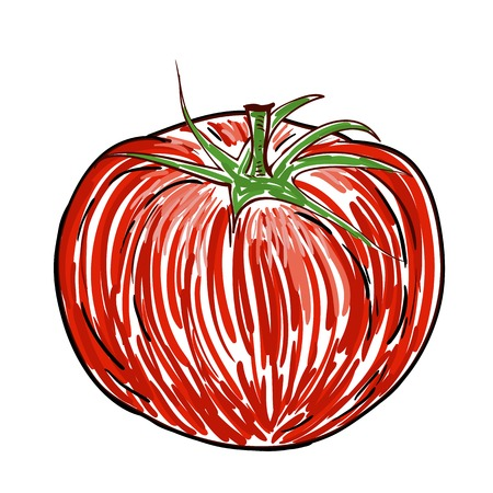 Watercolor Tomato isolated on white Vector