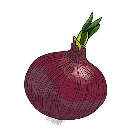 fruit clipart: Onion_with_sprout_vector