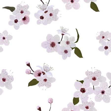 amande: Motif de fleur d'amande Illustration