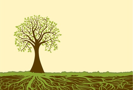 tree canopy: Vector tree Illustration