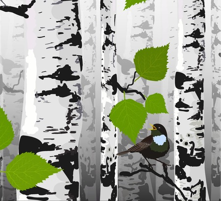 Bird of birches Illustration