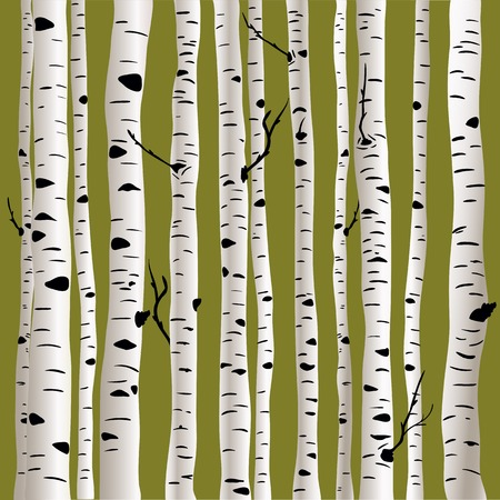 Birches in vector