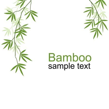 Branches de bambou vert Vecteurs