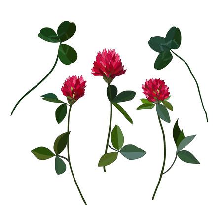 white clover: Red cloveres