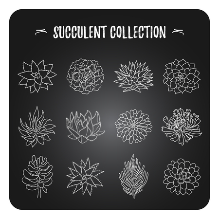 A collection of different types of succulents. Vector illustration of a chalk on a blackboard. Hand drawn style. Set isolated objects in different angles for your design.