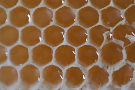 honey combs with honey very close, macrophotography