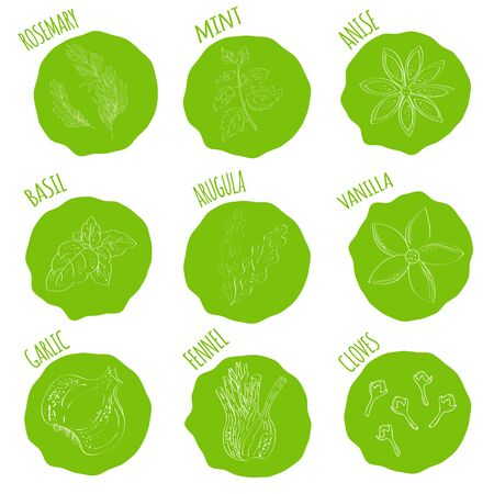 aromatic: Outline illustration fresh herbs. Fresh herbs and spices icon set handmade style icons in blob.