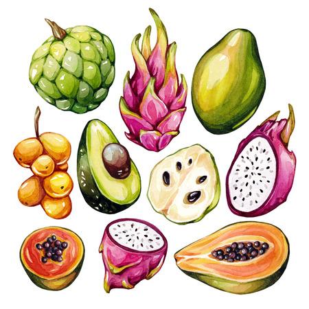 exotic fruits: Tropical fruits set. Exotic fruits set. Isolated watercolor elements. Dragon fruit, pitaya, papaya, avocado, cherimoya, longkong.