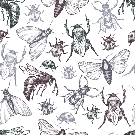 moth: Hand drawn vector pattern with insects in different poses. Moth, butterfly, bee, bumblebee, ladybug. Vector collection. Detailed realistic sketches. Ink, pen, linework.