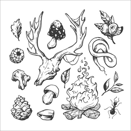 wild berry: Wildlife and forest. Hand drawn vector elements. Campfire, staghorns, skull, antler, snake, stone, ant, berries, leaves, mushrooms. Illustration