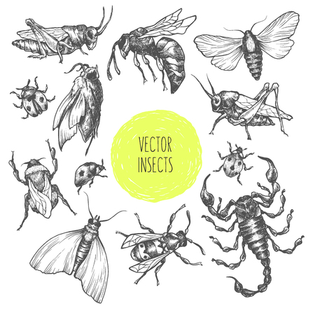 Set of hand drawn vector insects in different poses. Moth, butterfly, bee, bumblebee, grasshopper, locust, ladybug, scoprion. Vector collection. Detailed realistic sketches. Ink, pen, linework. Illustration