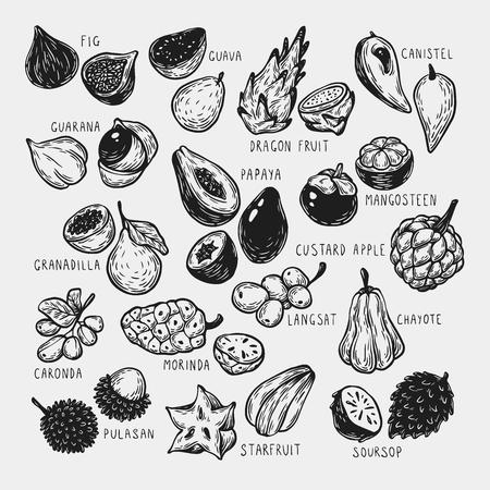 most popular: Set of hand drawn vector exotic fruits. Tropical fruits, vector collection. The most popular exotic plants. Dragon fruit, papaya, starfruit.