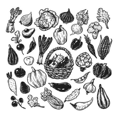 Ensemble vectoriel dessiné à la main de légumes. Grande collection de légumes. Cuisine fraîche, naturelle et végétarienne. Style de croquis, à main levée.