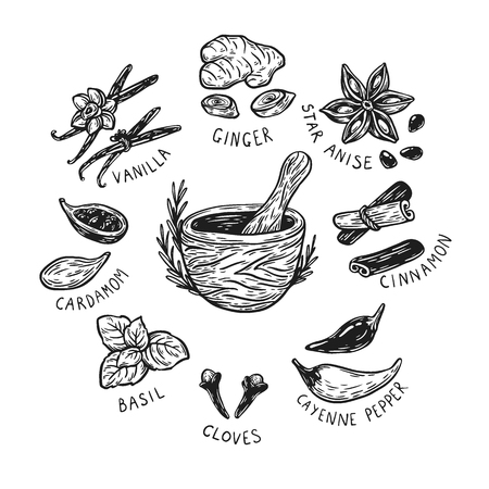 Set of hand drawn vector spices and herbs. Medicinal, cosmetic, culinary plants. Seeds, branches, flowers and leaves. Different types of condiment.
