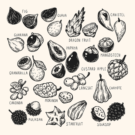 Set of hand drawn vector exotic fruits. Tropical fruits, vector collection. The most popular exotic plants. Dragon fruit, papaya, starfruit.