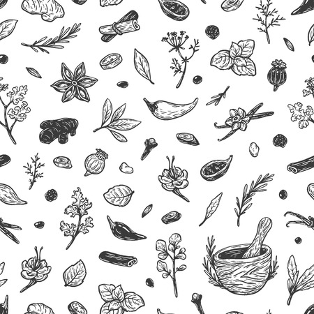 Pattern with hand drawn vector spices and herbs. Medicinal, cosmetic, culinary plants. Seeds, branches, flowers and leaves. Different types of condiment.