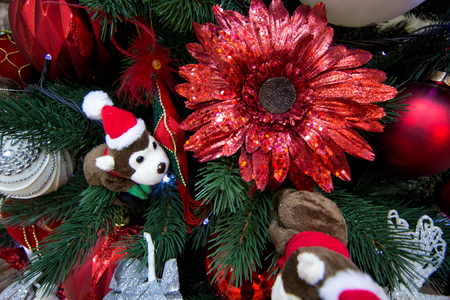 Little soft plush monkey in a New Years cap hanging on a Christmas tree, a surprise for the child. accessories presents, New year toys decorates the x-mas tree. big red aster flower. holidays time Stock Photo