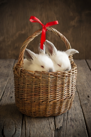 Card with Couple White Rabbits in the Basket with Red Ribbon on the Wooden Background photo