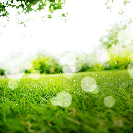 Background with Green Summer Landscape photo